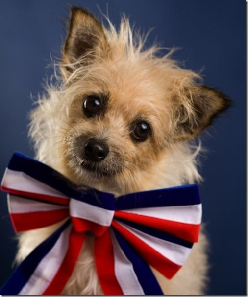 Patriotic Doggie