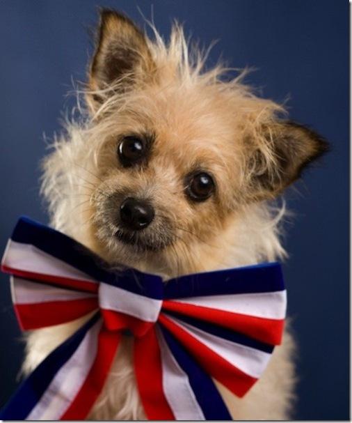 Patriotic Doggie