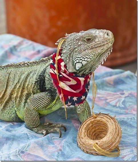 Patriotic Gilla Monster