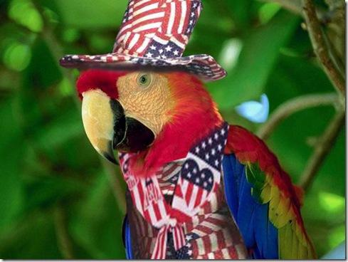 Patriotic-Parrot 2