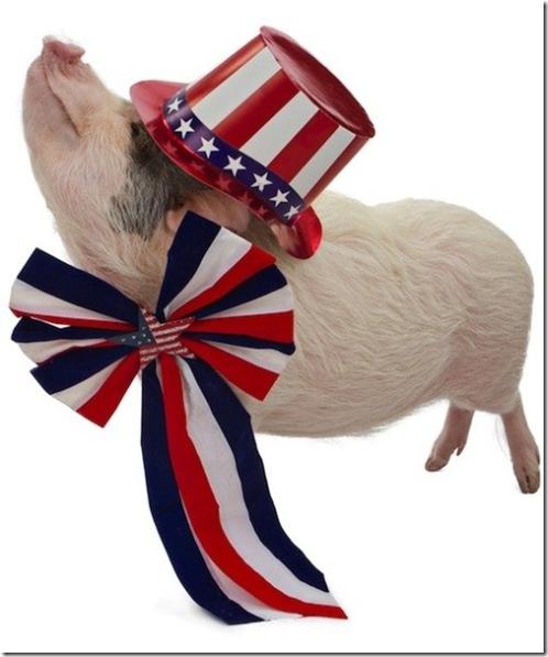 Patriotic Piggie