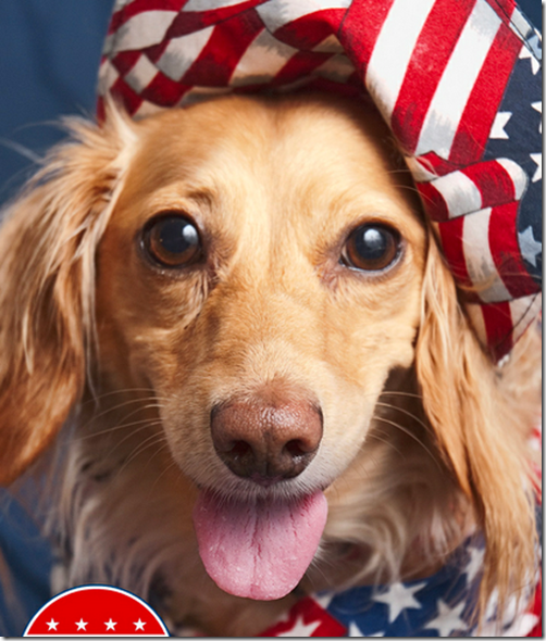 Patriotic Retreiver