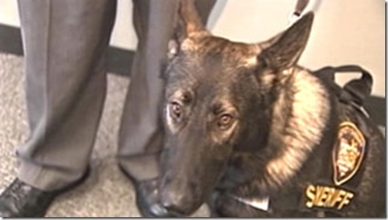 Zak K9Sheriff-killed by partner