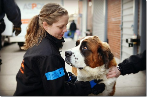 St Bernard Resuced After Hurricane Sandy