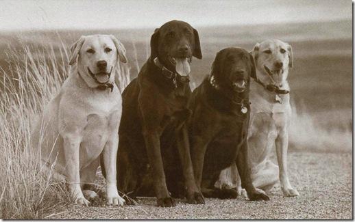 4 Dog Card