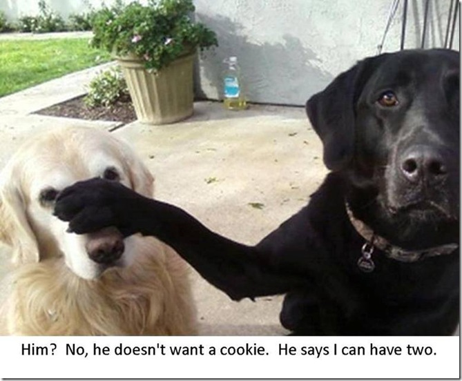 Him... He Doesn't Want a Cookie