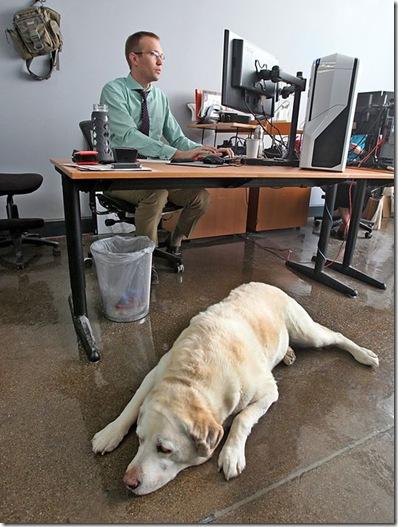 gan-pets-at-work