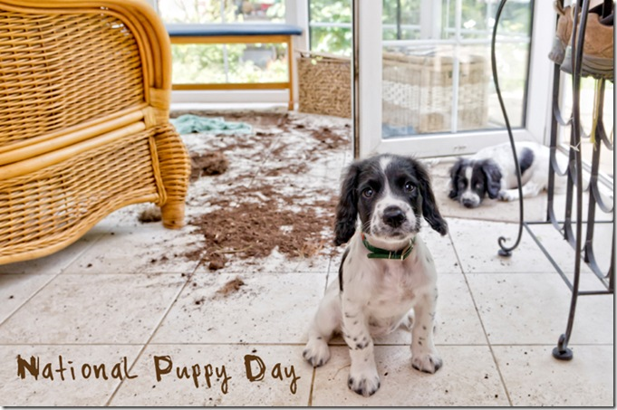 Oooops... National Puppy Day