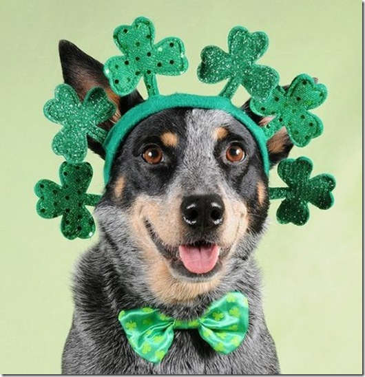St. Patricks Day Pup