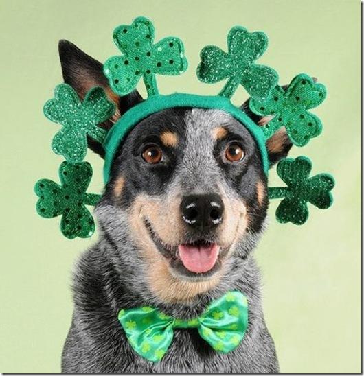 St. Patricks Day Pup