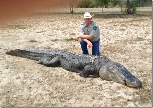 Texas Alligator