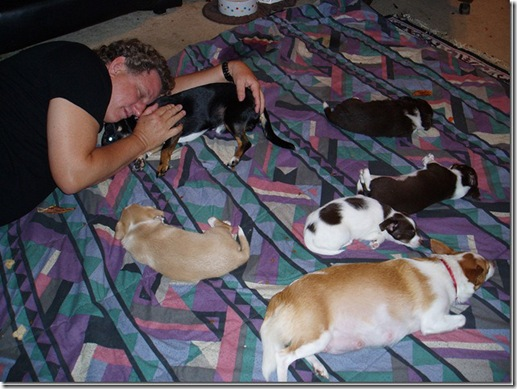 pups-7-weeks-old-everybodys-dreaming_thumb