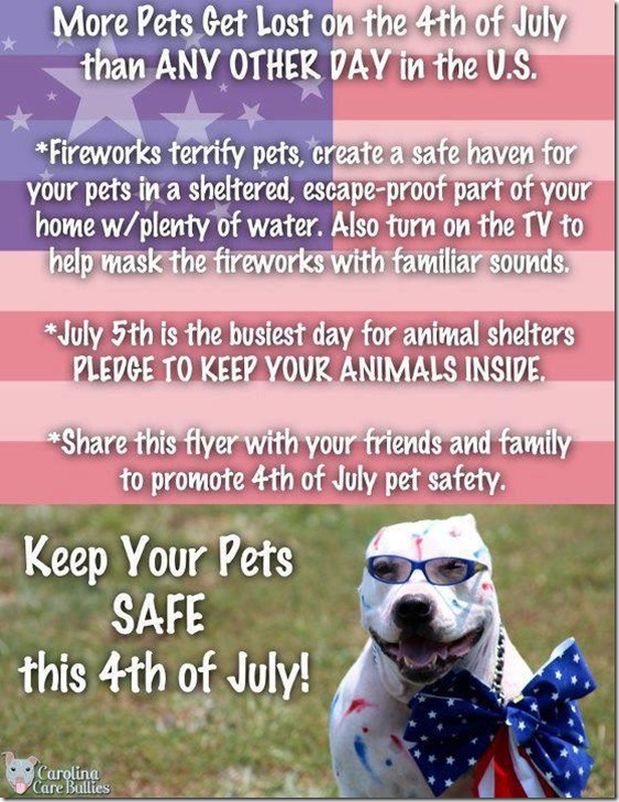4th-of-july pet flyer
