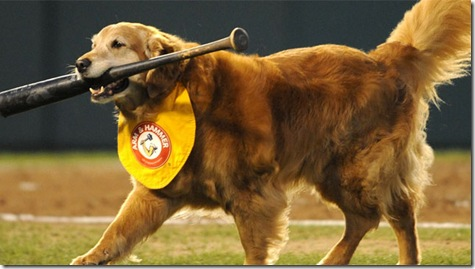 Chase - Bat Dog