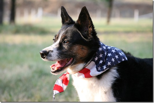 American Pride - Dog with Flag