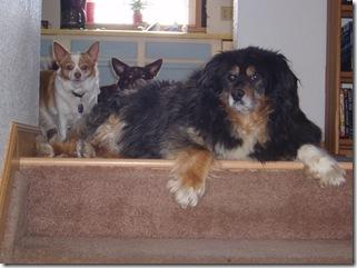 Stair Patrol