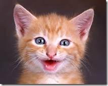 Cat Smiles 2