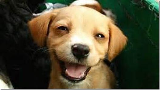 Dog Smiles 2