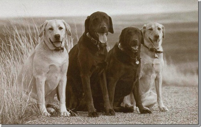 4-dog-card_Us… As-We-See-Ourselves th