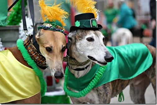 St. Patrick parade