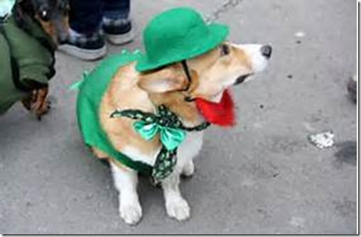 St Patrickls Day Pet Parade e