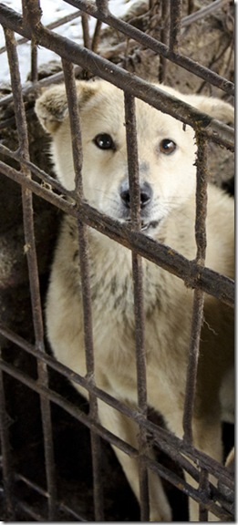 Stop Dog Meat Trade