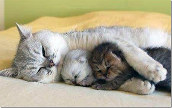 Mama and Babies... Kittens