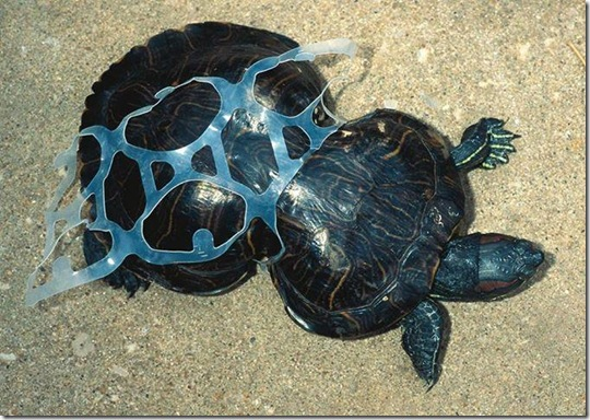 Power of Plastic